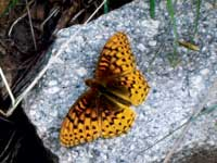 Photo of a butterfly on a rock