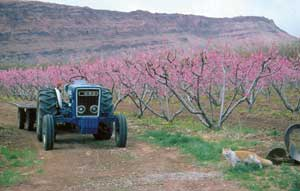 Clark's Orchard tractor