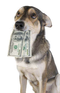 Dog with paper money in his mouth