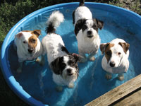 Doggies in a wading pool