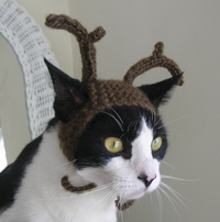 Kitty with antler on
