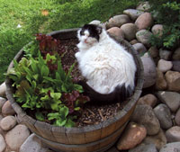 "Buster the cat, or ""Mr. B"" in a large flower pot"