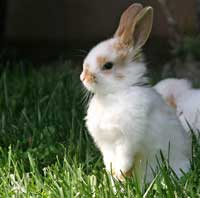 picture of a bunny