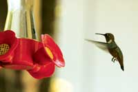 Photo of a hummingbird and feeder